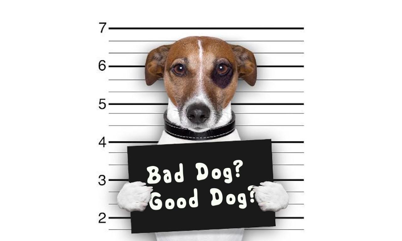 Bad Dog, Good Dog?
